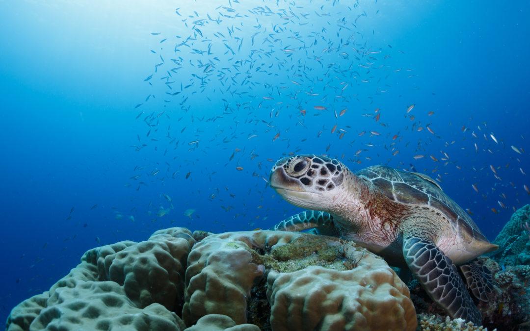Noticias bajo el mar desde Six Senses Laamu